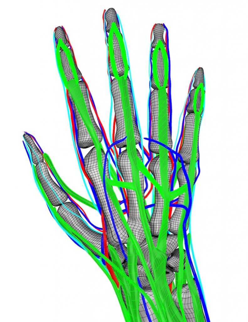 Computerized model of human hand